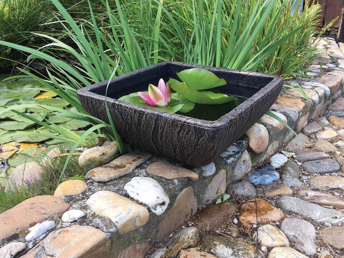 saksiya-tip-ikebana-vodni-rasteniya