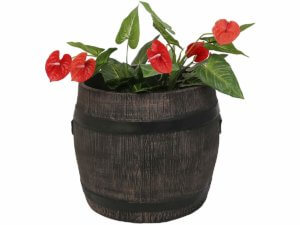 Кашпи за туи, лимони и декоративни дървета Голяма саксия и кашпа за палми и дървета