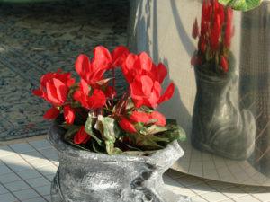 Dekorativna-saksiq-obuvka-malka