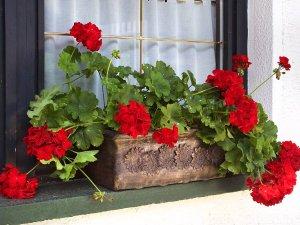 Balkonski sanducheta za cvetya