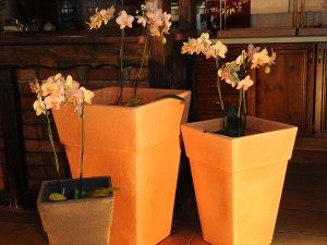 dekorativni-saksii-i-kashpi-za-cvetya