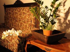 saksiya-za-razlichni-cvetya-i-bonsai