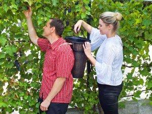 Кошове за бране на грозде и плодове