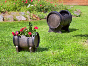dekorativni saksii i kashpi roto bulgaria