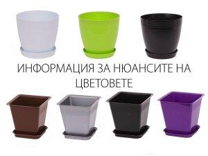 саксии-с-подложка-БУРДЕМ